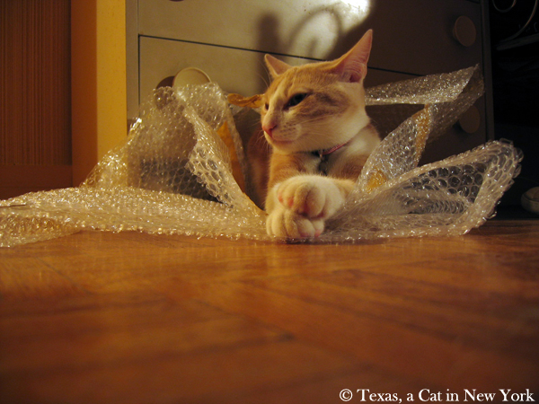 Texas a Cat in New York, bubble paper, cat in bubble paper