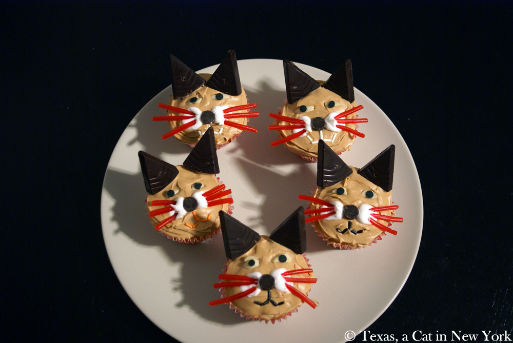 Texas a Cat in New York; Gotcha Day; cupcakes; cat cupcakes