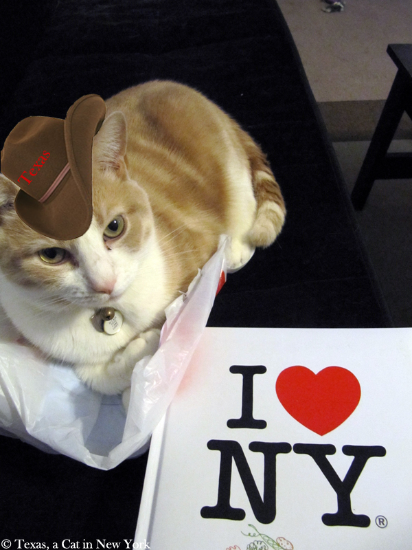 Texas a Cat in New York, Texas, New York, Texas cat, Cowboy hat, I love New York