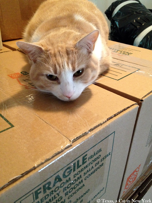 Texas a Cat in New York, cats, boxes