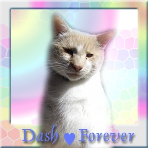 Dash Kitten
