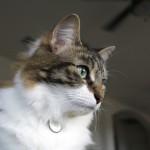 Kitshka   Texas, a cat in... Austin