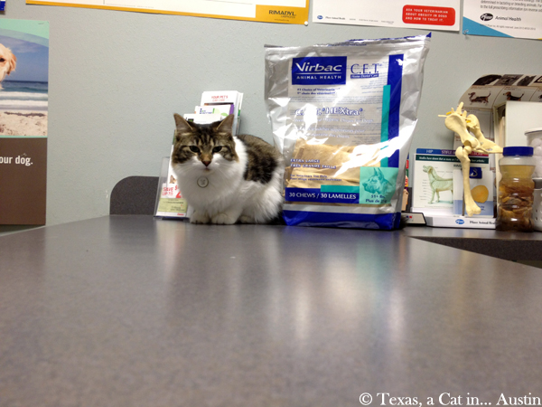 Kitshka at the vet