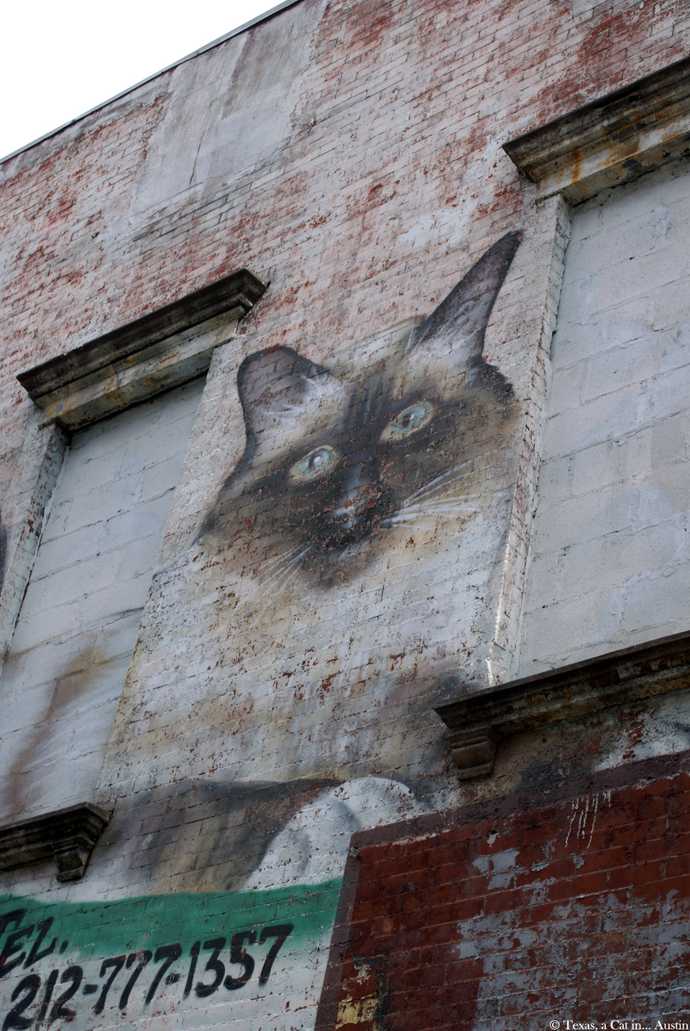 Cat Mural - Mama's Bar - East Village, NYC | Texas, a cat in... Austin