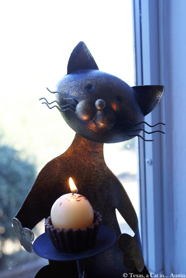 Remember Me Thursday – Light A Candle for a Pet – #LightForPets | Texas, a cat in... Austin