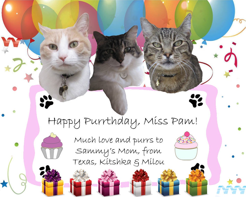 Happy Birthday to Pam! | Texas, a cat in... Austin