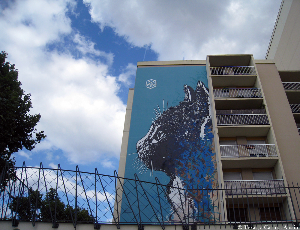C215 Cat Street Art - Paris, France | Texas, a cat in... Austin