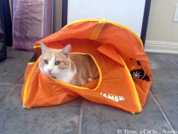 My tent | Texas, a cat in... Austin