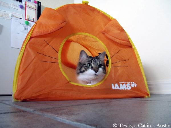 My tent | Texas a cat in... Austin & Texas a Parisian Cat in America » Blog Archive » Mondays Are For ...
