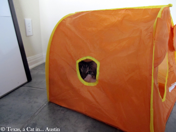 My tent | Texas, a cat in... Austin