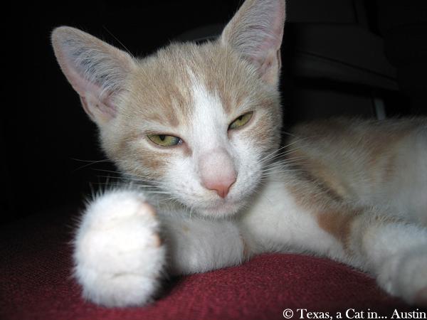 Texas Kitten Pics