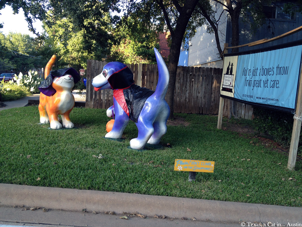 Halloween Decorations - Austin, TX | Texas, a cat in... Austin