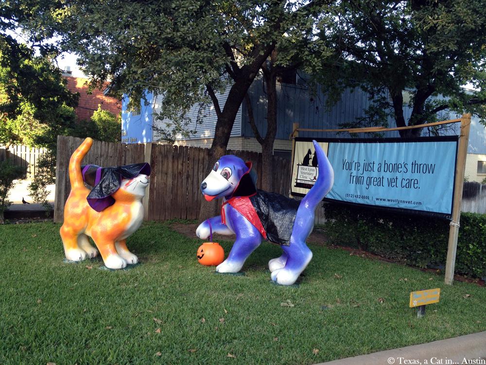 Halloween Decorations - Austin, TX | Texas, a cat in... Austin