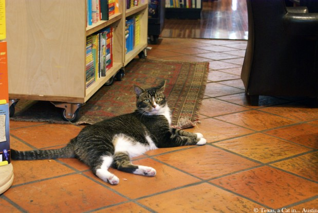 Bookstore Cats of NYC: Tiny at Park Slope Community Bookstore