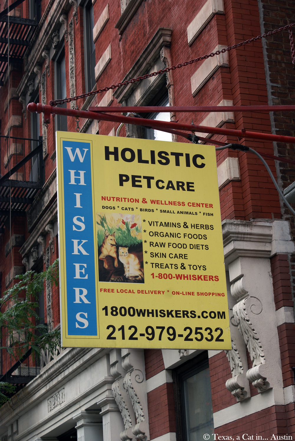Whiskers Holistic Pet Care | Texas, a cat in... Austin