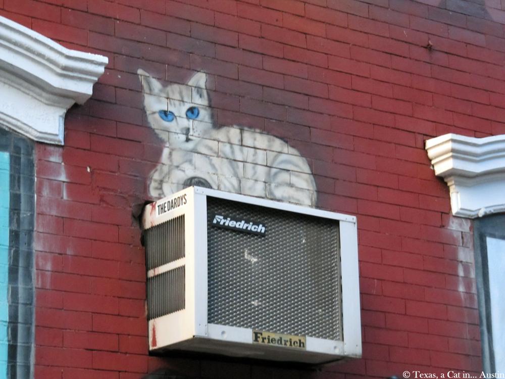 NYC Cat Mural | Texas, a cat in... Austin