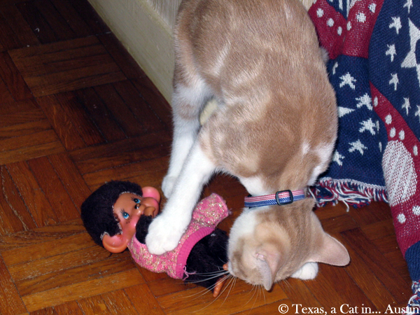 Monchhichi and Texas | Texas, a cat in Austin