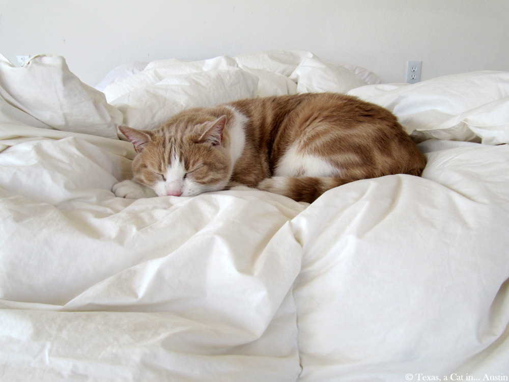 Sleeping-Dragon