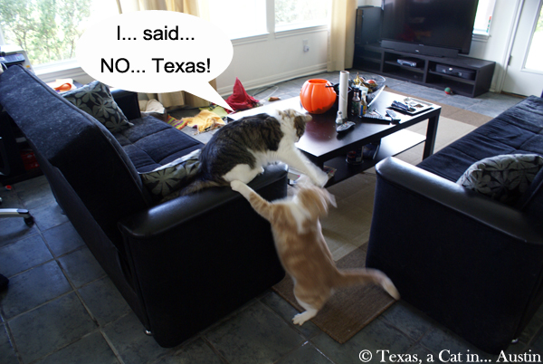 Tocktober | Texas, a cat in... Austin