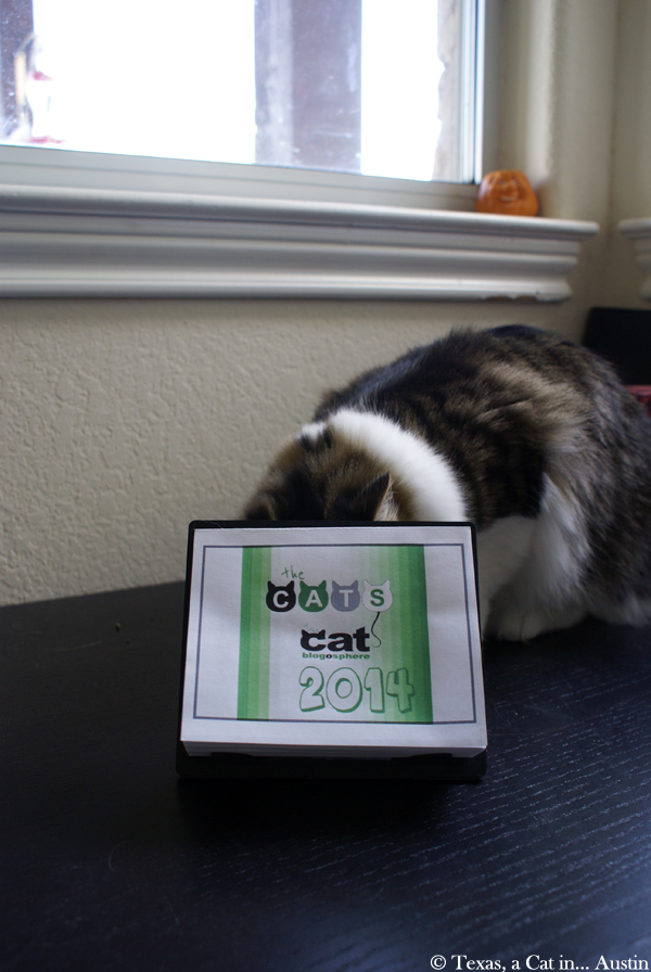 The Cat Blogosphere Calendar | Texas, a Cat in... Austin