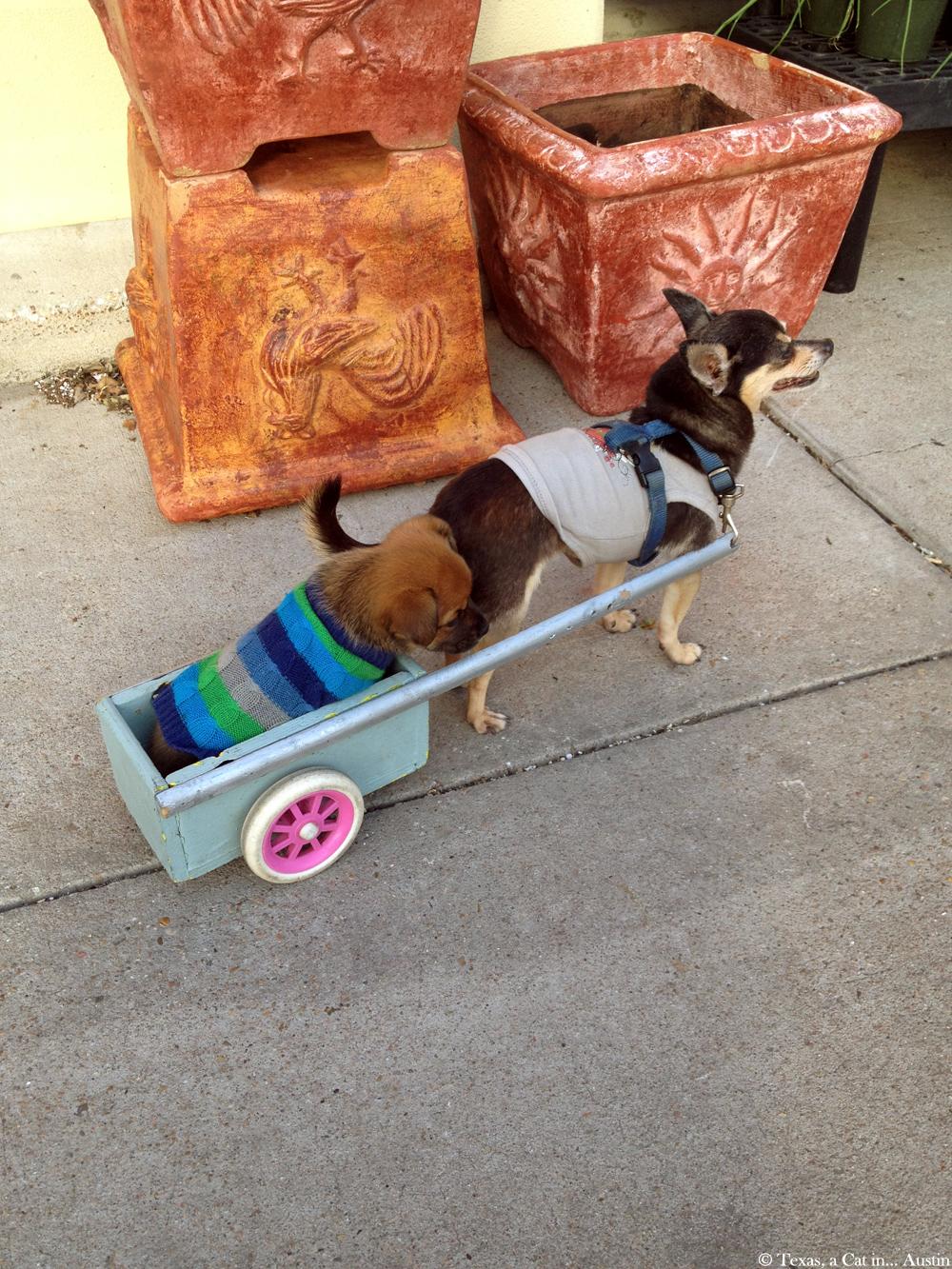 Cute doggies  Texas, a cat in... Austin