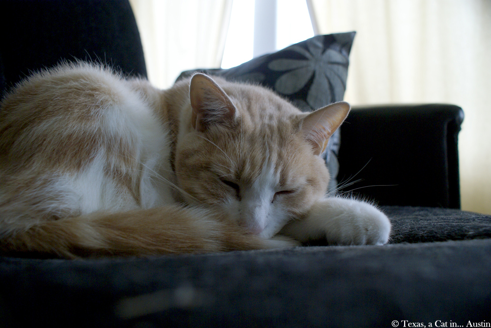 Texas, busy doing nothing | Texas, a cat in... Austin