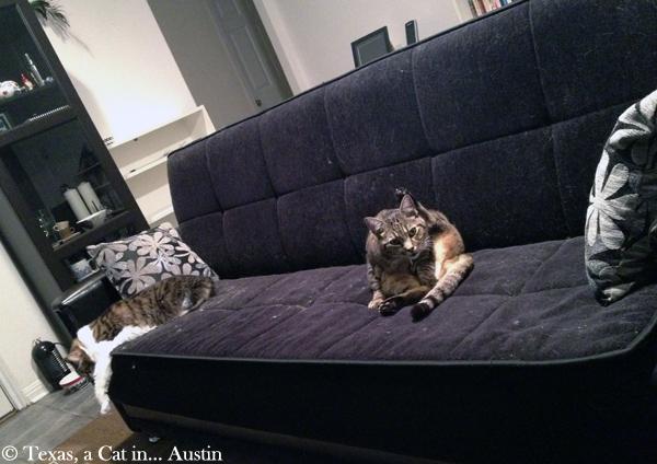Milou and Kitshka | Texas, a Cat in... Austin