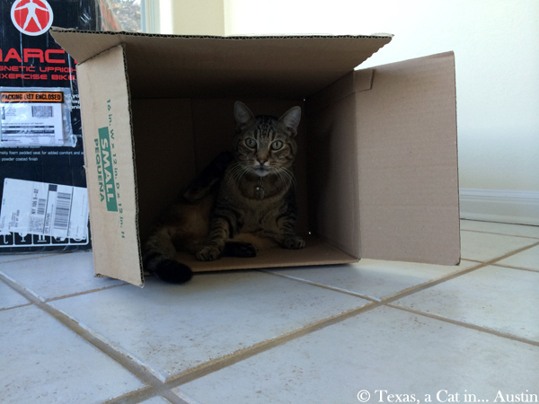 Milou in a box | Texas, a cat in... Austin