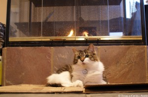 Kitshka in front of the fireplace | Texas, a cat in... Austin