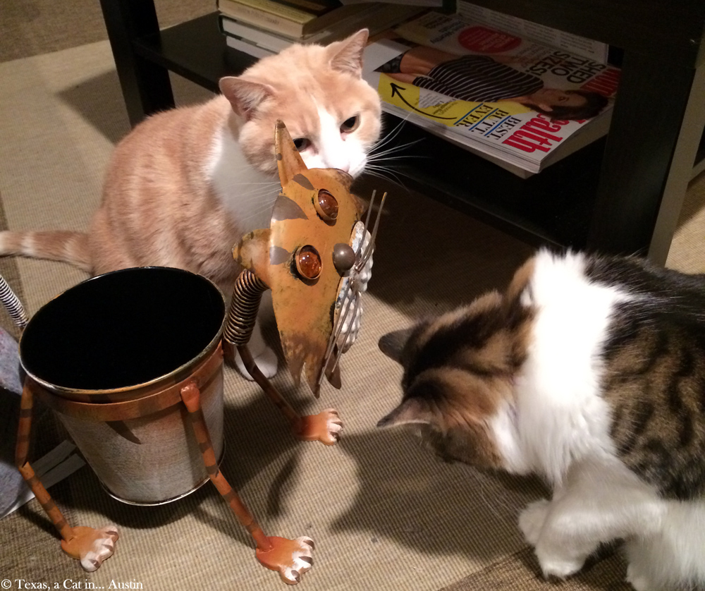 Texas and Kitshka meeting a new furriend | Texas, a cat in... Austin