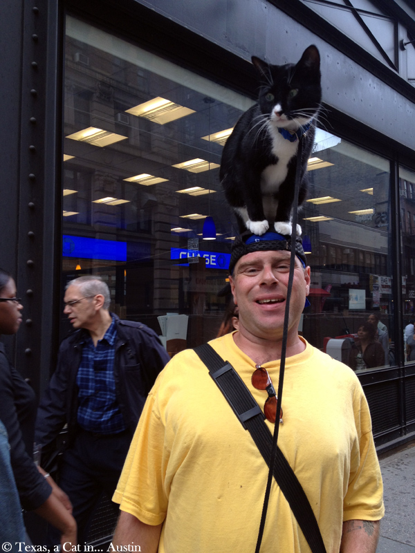 "Cats in New York: Meet Nicholas and his Human, ""the Cat on the Head Guy"""