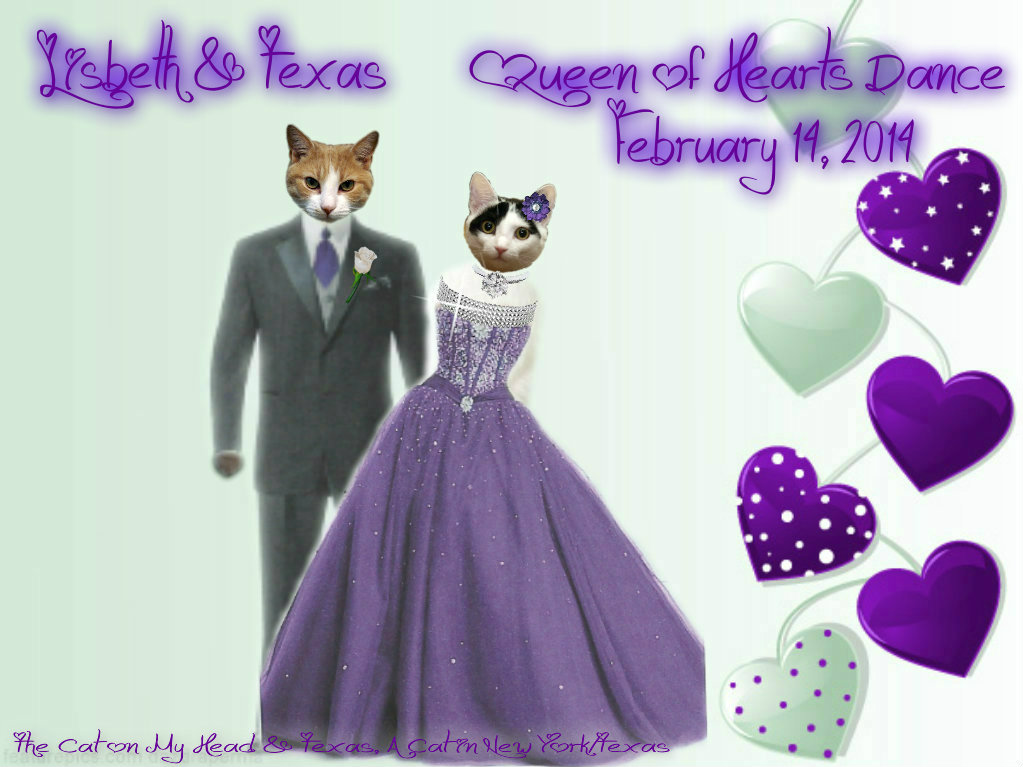 Lisbeth and Texas - Valentine's Day | Texas, a cat in... Austin