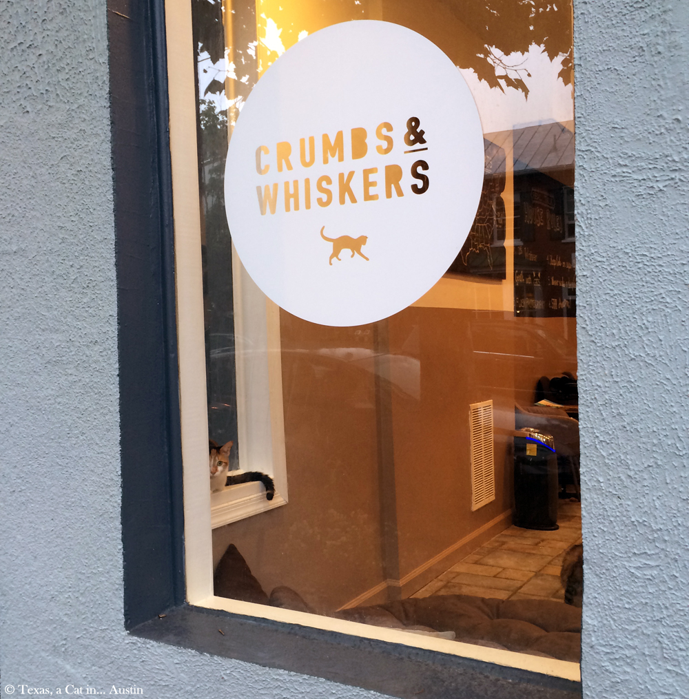 Crumbs & Whiskers Cat Cafe - Washington, DC | Texas, a cat in... Austin