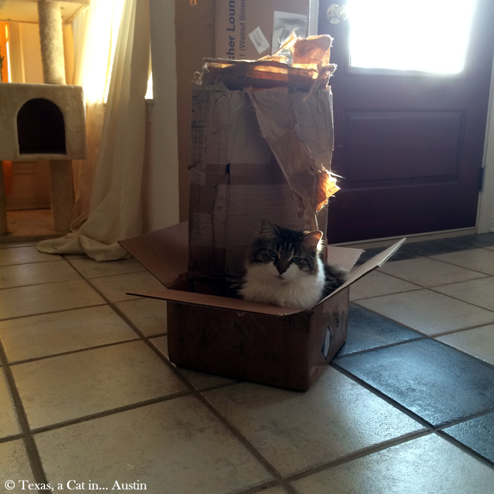 Kitshka - International Box Day 2015 | Texas, a cat in... Austin