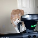 Texas on the apartment bike | Texas, a cat in... Austin