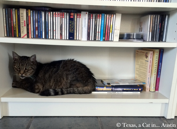 Milou bookcased | Texas, a Cat in... Austin