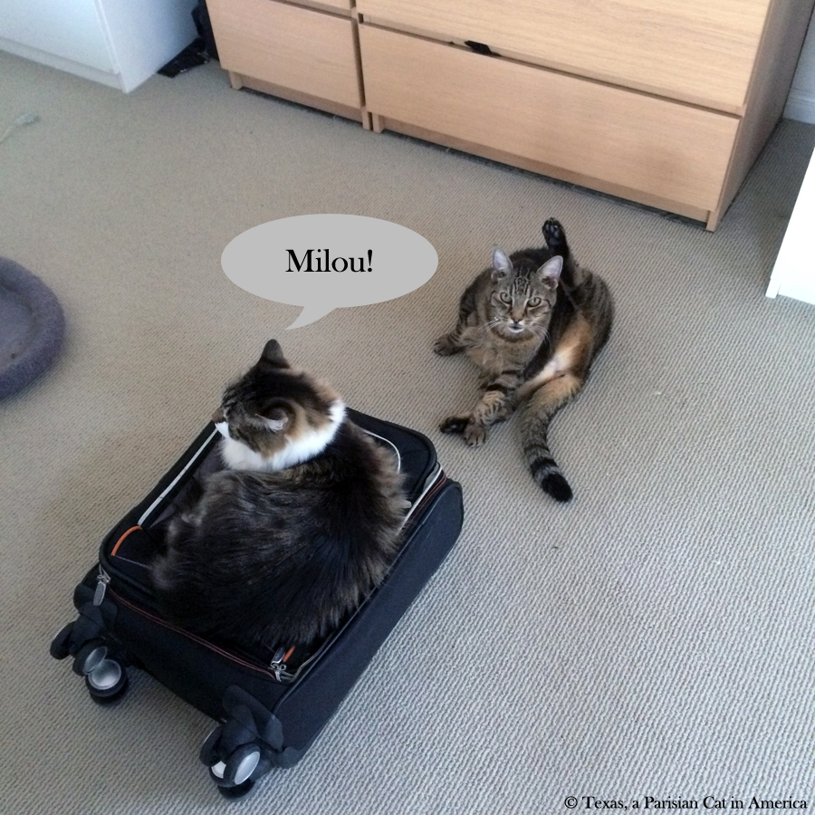 Kitshka & Milou | Texas, a Parisian Cat in America