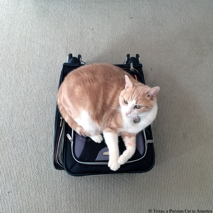 Texas keeping the luggage | Texas, a Parisian Cat in America