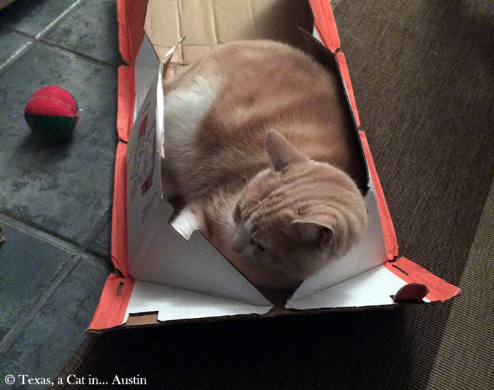 Texas in a box | Texas, a Cat in Austin