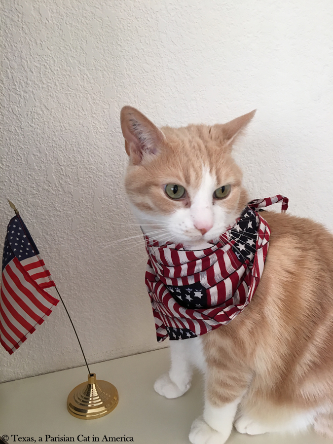 Texas celebrating Fourth of July | Texas, a Parisian Cat in America