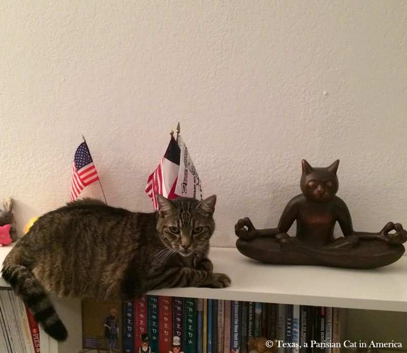 Milou | Texas, a Parisian Cat in America