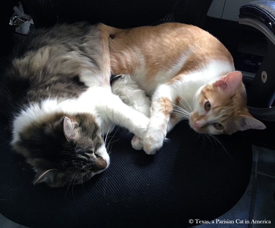 Kitshka & Whiskey Holding Paws | Texas, a Parisian Cat in America