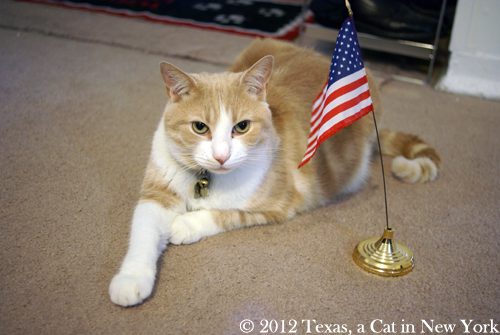 Happy birthday, America! I'm glad to live here =^.^=