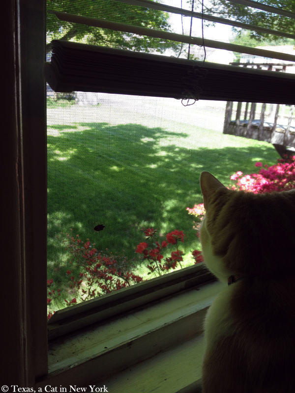 Humanology, cat planning and BlogPaws