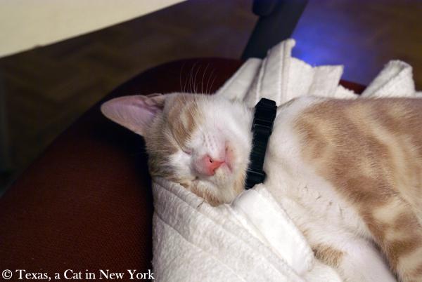Mondays Are For Memories: More Kitten Naps