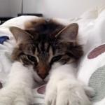 Texas a cat in New York, Kitshka, sleep