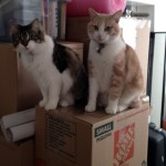 Texas a Cat in New York; cats; Texas; Kitshka; boxes; moving