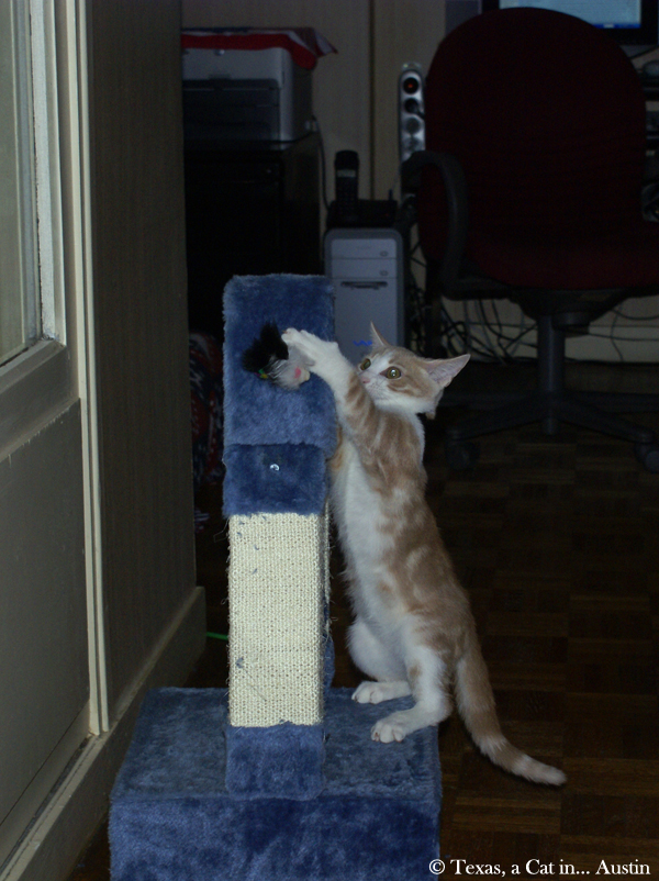 Mondays Are For Memories: My First Cat Tree