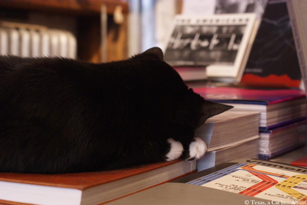 Spoonbill & Sugartown, Booksellers   Texas, a cat in... Austin