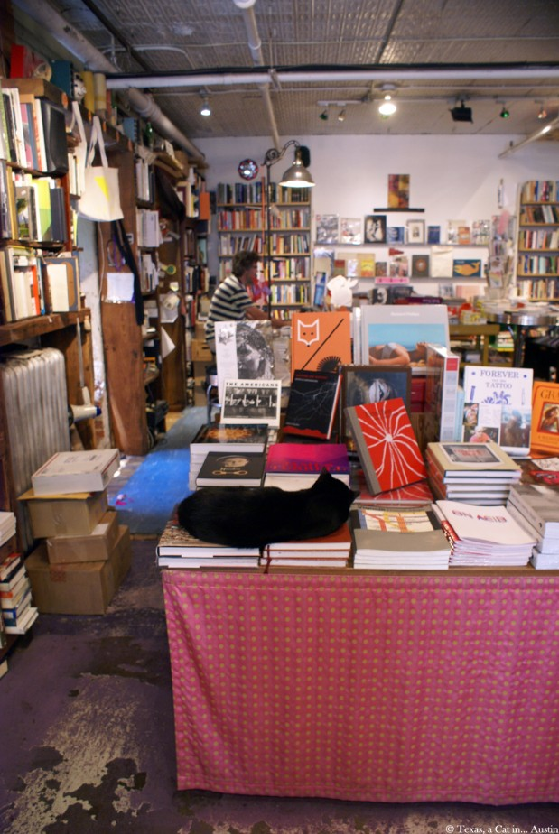 Bookstore Cats of NYC: Hayes and Rainer at Spoonbill & Sugartown, Booksellers